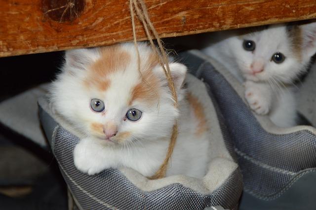 目がくりくりな猫