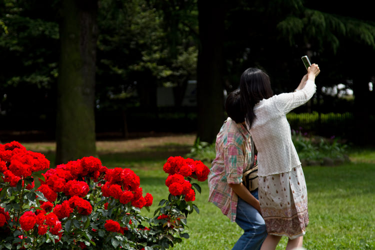 薔薇の前で撮影