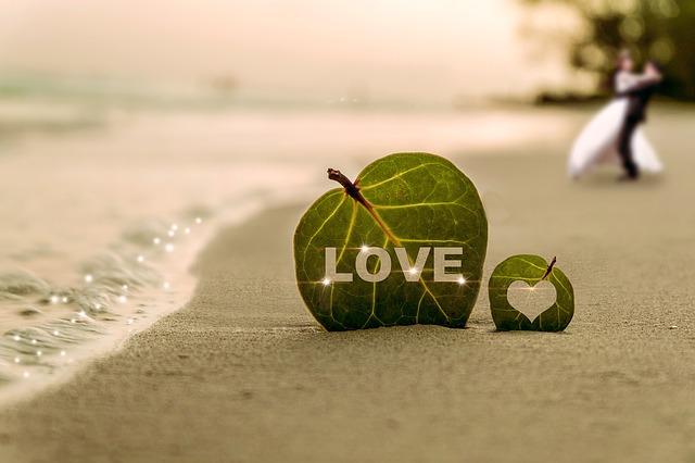 木の葉と海と恋
