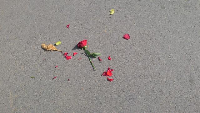 散ったバラ