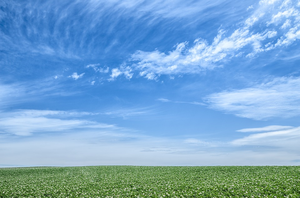 一面の草原